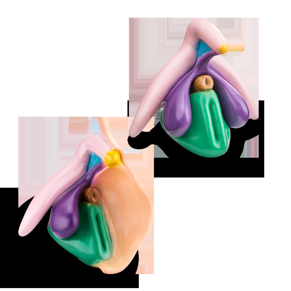 Clitoris Plus & Vulva Modell im Set | nach Prof. Dr. D. Haag-Wackernagel